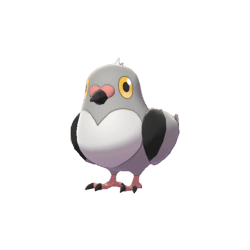 Pokemon Sword and Shield Pidove