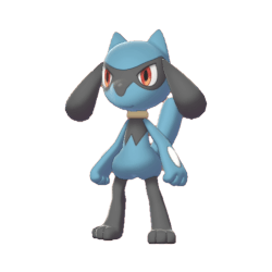 Pokemon Sword and Shield Riolu