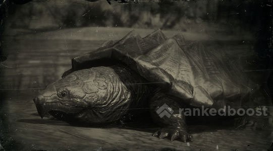 Red Dead Redemption 2 Turtle