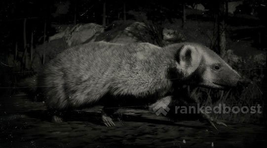 Red Dead Redemption 2 Badger