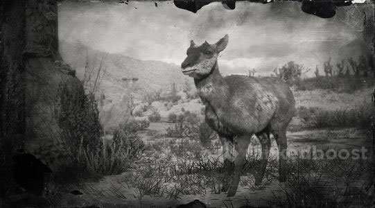 Red Dead Redemption 2 Pronghorn | Locations, Crafting