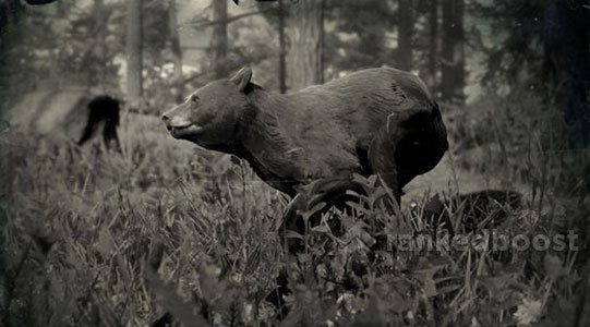 Red Dead Redemption 2 Black Bear