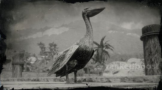 Red Dead Redemption 2 Pelican