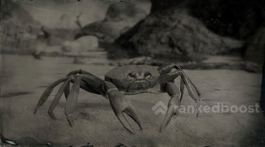 Red Dead Redemption 2 Crab