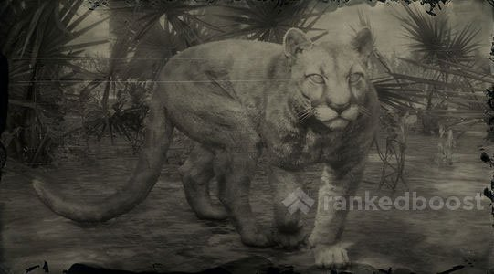 Image result for rdr2 panther