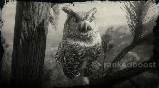 Red Dead Redemption 2 Owl