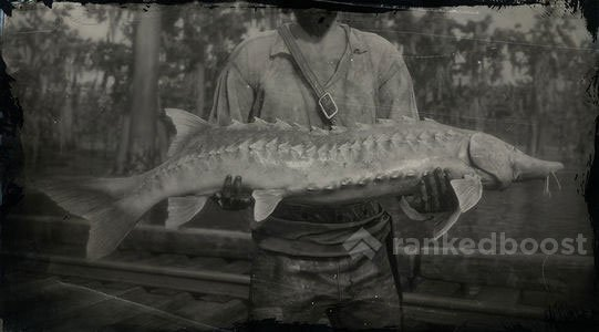 Red Dead Redemption 2 Lake Sturgeon