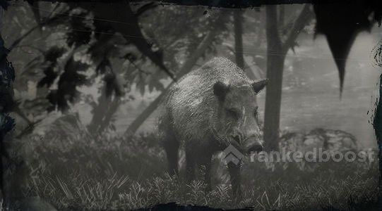 Red Dead Redemption 2 Boar