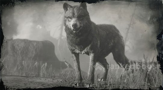 Red Dead Redemption 2 Wolf | Locations, Crafting, Legendary