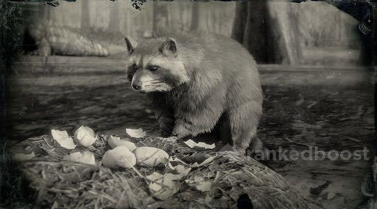 Red Dead Redemption 2 Raccoon