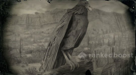 Red Dead Redemption 2 Vulture