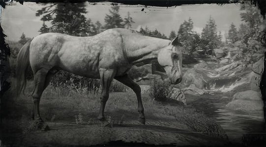 Red Dead Redemption 2 Thoroughbred