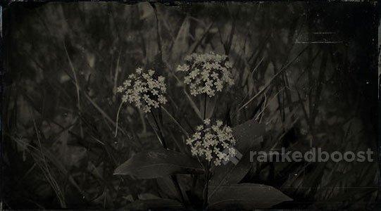 Red Dead Redemption 2 Milkweed