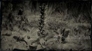 Red Dead Redemption 2 Hummingbird Sage