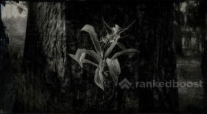 Red Dead Redemption 2 Spider Orchid