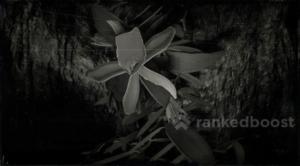 Red Dead Redemption 2 Vanilla Flower